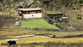 foto of yaks  - Farm with typical architecture of Kham orchard paddock and yak