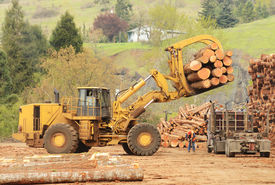 image of logging truck  - A large wheeled front end log loader unloading a log truck at a log yard at a lumber processing mill that specializes in small logs - JPG