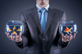 foto of fishbowl  - Businessman holding in both hands  fishbowl with goldfishes - JPG