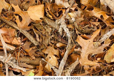 Dry Leaves And Twigs