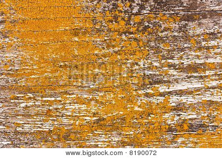 Wood And Lichen Background