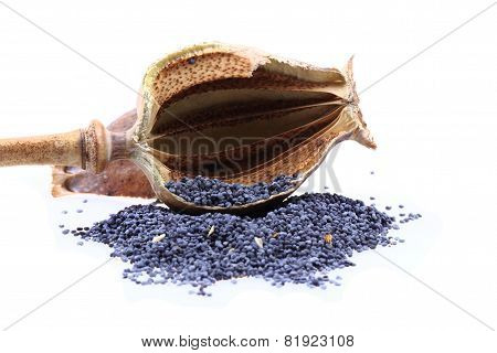 Natural Poppy Head With Seeds