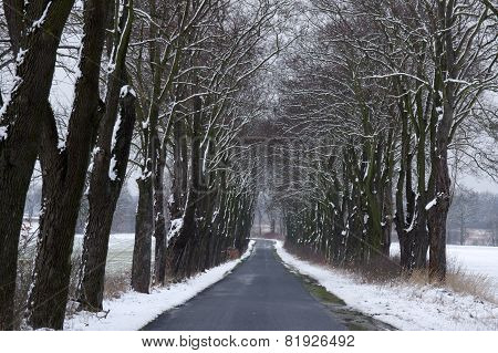 Country road in winter.