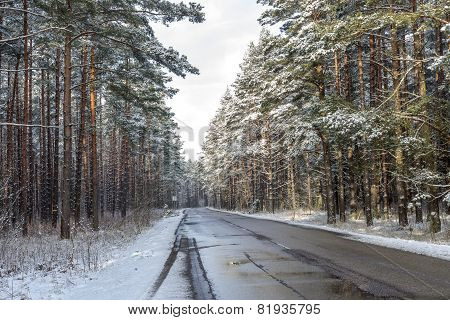 Forest Road On A Cloudy Winter Day