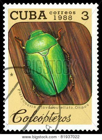 Vintage  Postage Stamp.   Beetle Platycoelia Flavoscuyellata. Ohaus.