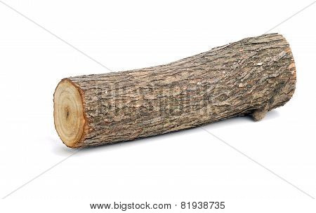 Willow Log Isolated