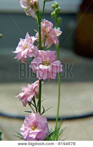 Pink Flowers in the Summer