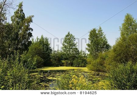 Little Belorussian Swamp Landscape
