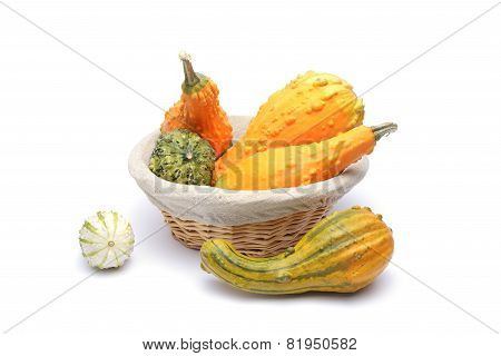 Basket And Colorful Pumpkins Collection