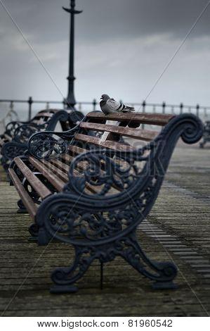 Memorial Bench Pigeon