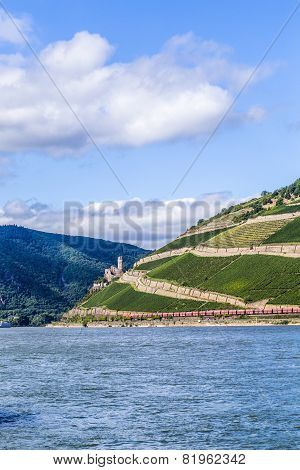 Beautiful Vineyards At  The Rhine Valley In Ruedesheim With Train And Castle Kaub