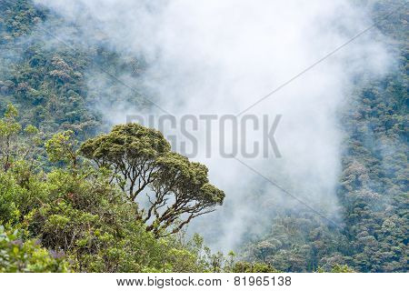 Clouds Envelop The Hills Near Macas, Andes. Ecuador