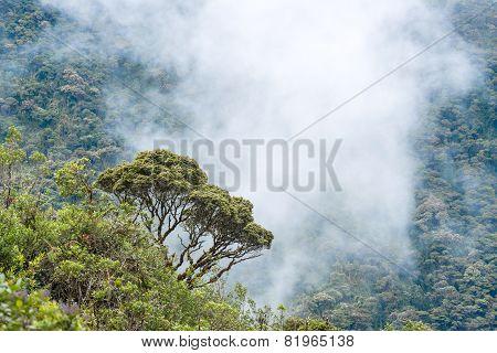 Clouds Envelop The Hills Near Macas, Andes. Ecuador