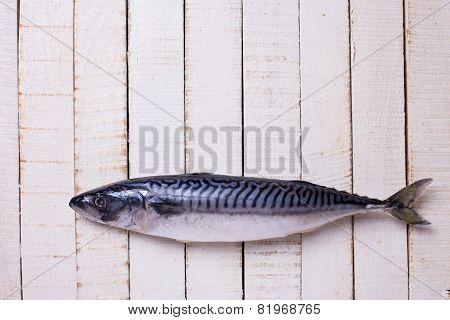 Raw Sardine Fish