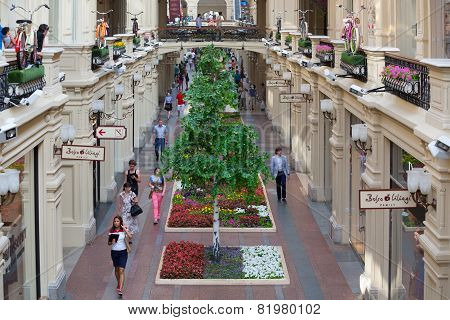 Artificial Trees And Balconies Decorated Bicycles In Gum Store
