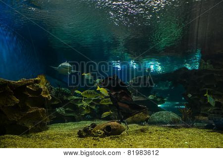 A large aquarium with marine animals
