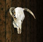 stock photo of cow skeleton  - Cow Skull with horns against a paneled wood background - JPG