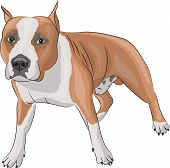 picture of american staffordshire terrier  - Large dog breed American Staffordshire Terrier in front - JPG