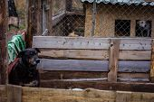 image of begging dog  - sad dog in dog shelter in autumn - JPG