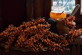 picture of sea-buckthorn  - Branches of sea - JPG