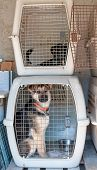 pic of caged  - Captured stray dog in a cage at a dog sanctuary  - JPG