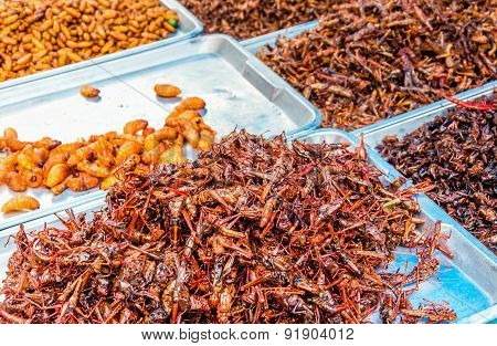 Locusts to sell at the market in Bangkok, Thailand