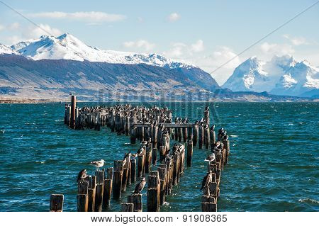 King Cormorant Colony, Puerto Natales, Chile