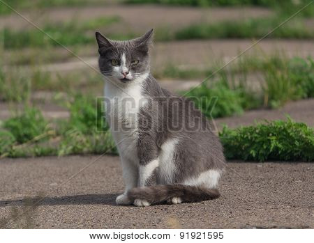 Homeless Gray Cat