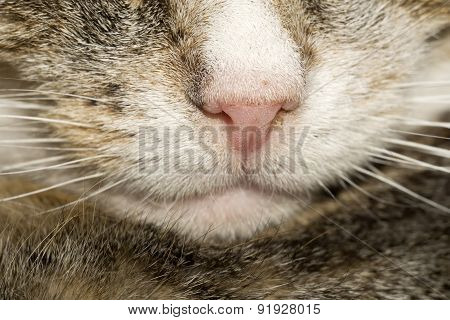 Macro Of Cat Nose