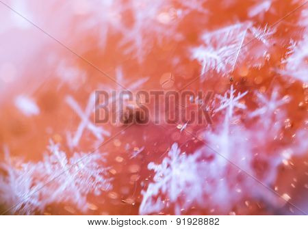 Supermacro Of Snowflakes