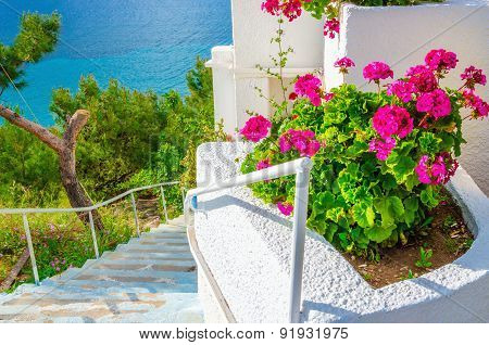 Pink flowers with white stairs by sea in Greece