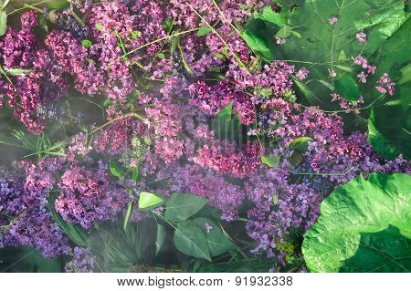 Lilac Flowers on Water Surface