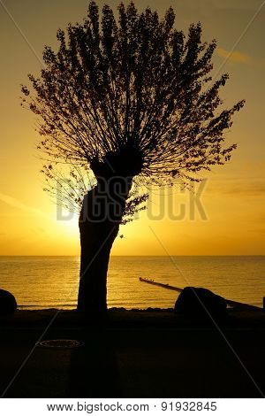 Silhouette Of A Tree At The Dawn