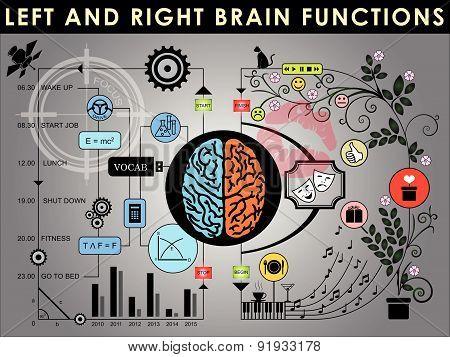 Brain 002