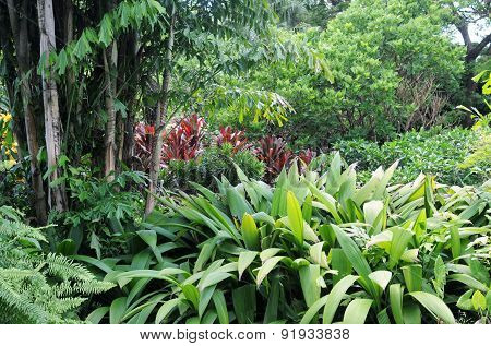 Botanical Garden Of Deshaies In Guadeloupe