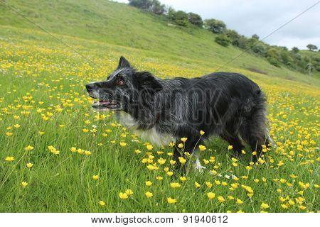 Crouching amongst the buttercups