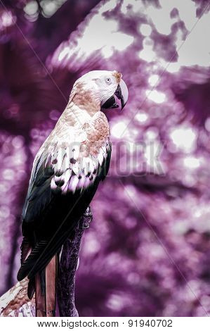 Infrared Of Scarlet Macaw Parrot