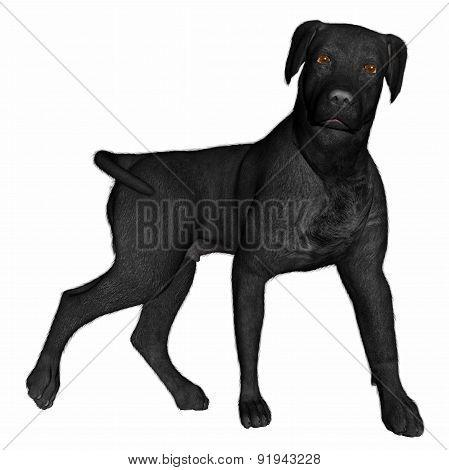 Black labrador dog standing - 3D render
