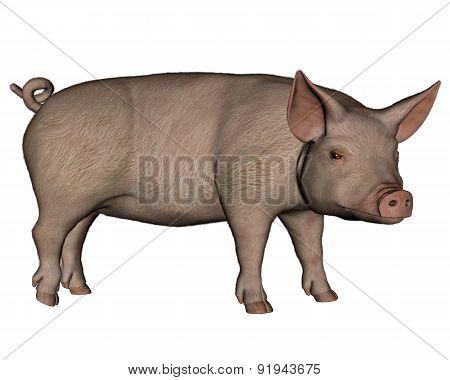 Pig standing - 3D render