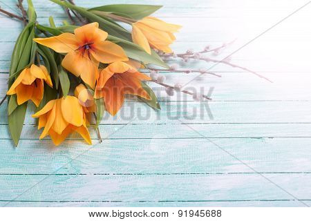 Background With Fresh Tulips And Willow Flowers