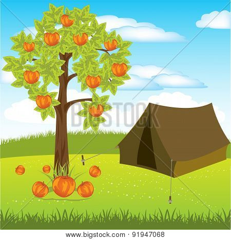 Tent under apple tree
