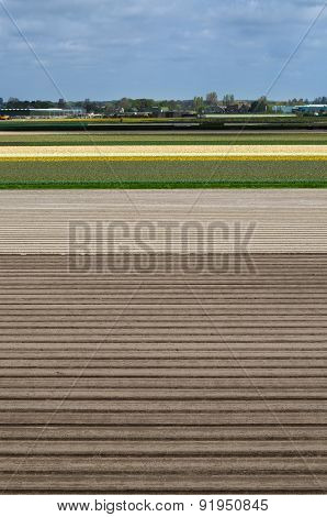 Dutch Flowerbed After Harvest In Lisse