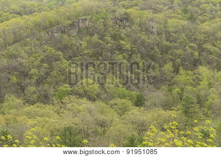 Spring Trees In Hills