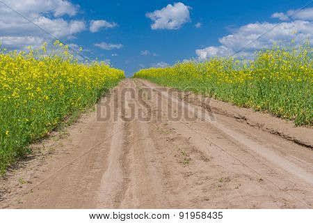 Earth road in rape field