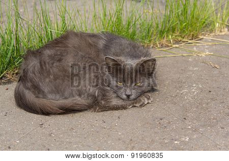 Sad Homeless Cat Lying On The Asphalt