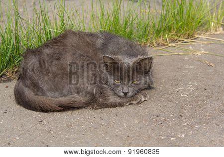Sad Homeless Cat Lying On The Asphalt