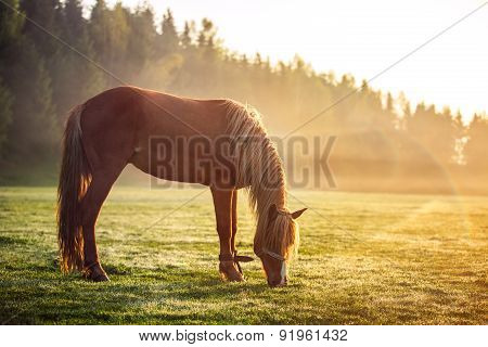 Horse Grazing On A Green Field At Sunrise, Landscape