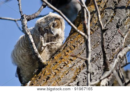 Young Owlet Scratching Its Eye With Its Talon While Perched In A Tree