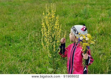 A Little Girl Sees A Flower