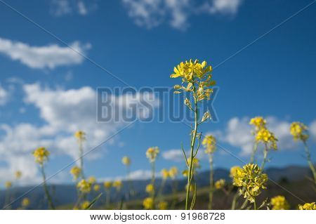 Single Yellow Mustard Stem
